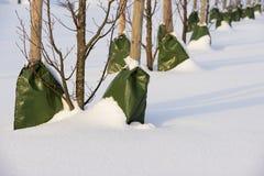 Piantatura degli alberi nella città nell'inverno immagine stock