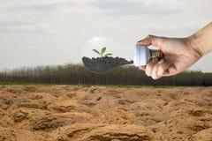 Piantatura degli alberi per l'albero ecologico di concetto dell'ambiente nella lampadina immagini stock libere da diritti