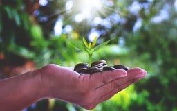 Piantatura degli alberi sulle monete di oro in mani della gente fotografia stock libera da diritti