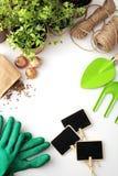 Piantatura degli strumenti su fondo bianco Fotografia Stock