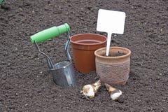 Piantatura dei daffodils delle lampadine che tengono un segno Fotografia Stock