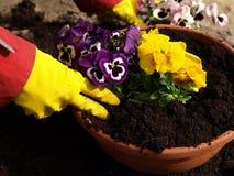 Piantatura dei fiori fotografia stock