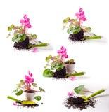 Piantatura dei fiori Concetto di giardinaggio Immagine Stock