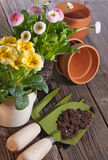Piantatura dei fiori della molla Fotografie Stock
