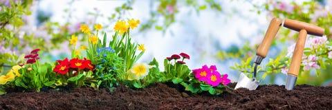 Piantatura dei fiori della molla in giardino soleggiato fotografia stock libera da diritti