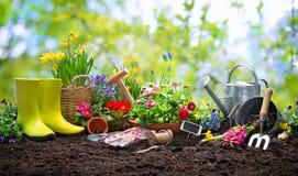 Piantatura dei fiori della molla nel giardino fotografie stock libere da diritti