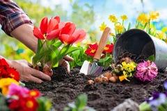 Piantatura dei fiori della molla nel giardino immagini stock libere da diritti