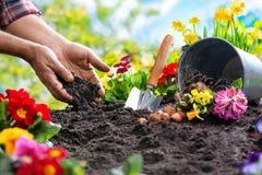 Piantatura dei fiori della molla nel giardino fotografia stock