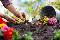 Piantatura dei fiori della molla nel giardino immagine stock