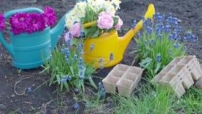 Piantatura dei fiori in giardino soleggiato stock footage