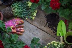 Piantatura dei fiori nel giardino Concetto di giardinaggio Fotografie Stock Libere da Diritti