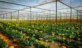 Piantatura dei fiori nella serra Fotografia Stock Libera da Diritti