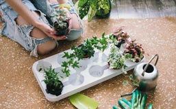 Piantatura dei fiori, succulenti nella casa Lavoro a casa Piante e strumenti di giardinaggio su fondo di legno, fotografia stock libera da diritti