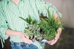 Piantatura dei fiori, succulenti nella casa Lavoro a casa Piante e strumenti di giardinaggio su fondo di legno, fotografia stock