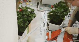 Piantatura dei fiori sul balcone video d archivio