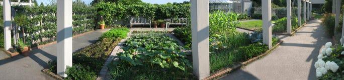Piantatura dei pomodori Fotografia Stock