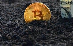 Piantatura del bitcoin nella terra fotografia stock