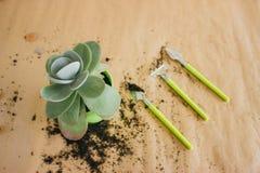 Piantatura del fiore in un vaso verde fotografia stock