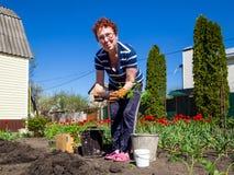 Piantatura del pomodoro nel giardino Fotografia Stock
