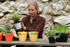 Piantatura del POT delle erbe Fotografia Stock Libera da Diritti