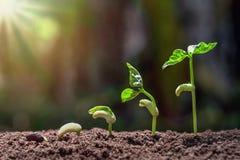 piantatura del punto crescente con il fondo verde della natura fotografia stock