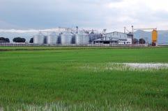 Piantatura del riso e dello stoccaggio fotografia stock libera da diritti