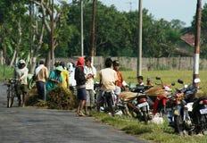 Piantatura del riso in Indonesia Fotografie Stock Libere da Diritti