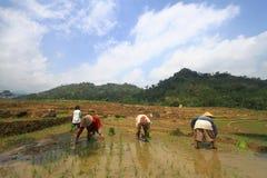 Piantatura del sistema di coltivazione con Swales Fotografia Stock