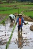 Piantatura del sistema di coltivazione con Swales Immagini Stock