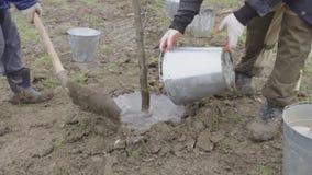 Piantatura dell'albero giovane nel parco Innaffiando la piantina e scavatura del pozzo nuovo video d archivio