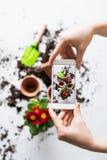 Piantatura della composizione nelle piantine Mani femminili che tengono uno smartphone fotografia stock