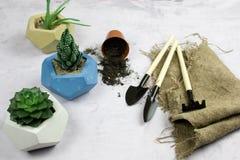 piantatura della crassulacee in vaso concreto, vista superiore degli strumenti di giardino immagine stock