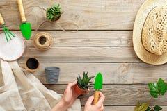 Piantatura della pianta con gli strumenti di giardinaggio sulla tavola di legno, disposizione piana, vista da sopra Facendo il gi fotografia stock libera da diritti