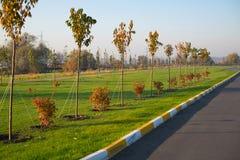 Piantatura della primavera degli alberi nel parco lungo la strada immagini stock libere da diritti