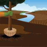 Piantatura della scena dell'azienda agricola di giornata dell'albero dell'albero Immagini Stock