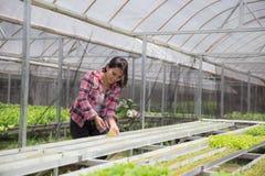 Piantatura della vita nuova nell'azienda agricola Fotografia Stock Libera da Diritti
