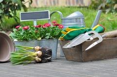 Piantatura delle lampadine di fiore Fotografia Stock