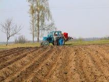 Piantatura delle patate Fotografia Stock