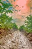Piantatura delle patate con il sistema di irrigational Fotografia Stock