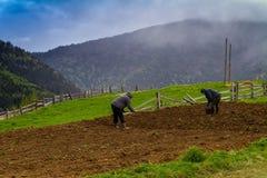 Piantatura delle patate nelle montagne carpatiche Immagine Stock Libera da Diritti