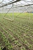 Piantatura delle piante andive giovani nuove Fotografie Stock