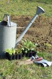 piantatura delle piantine Fotografia Stock