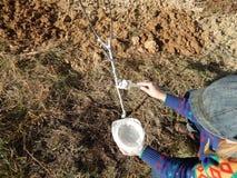 Piantatura delle piantine giovani dell'albero in autunno fotografia stock libera da diritti