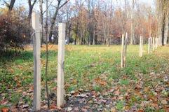 Piantatura di caduta degli alberi e degli arbusti Piantatura alberi correttamente con due pali in autunno immagine stock libera da diritti