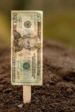 Piantatura finanziaria Fotografia Stock