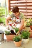 Piantatura i fiori e delle erbe immagine stock libera da diritti
