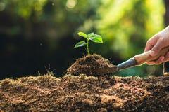 Piantatura il frutto della passione e della mano di crescita degli alberi che innaffiano alla luce ed al fondo della natura immagine stock libera da diritti