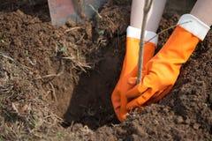 Piantatura piantagione di arbusti o dell'albero fotografia stock