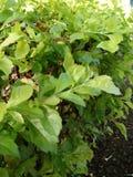 piante Immagini Stock Libere da Diritti
