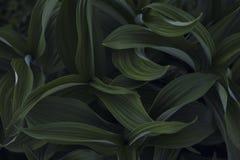 piante Fotografie Stock Libere da Diritti